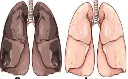 La Crème de tartre pour éliminer la nicotine de votre corps!