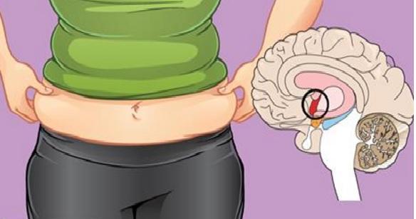voici pourquoi vous n'arrivez pas à perdre de la graisse du ventre